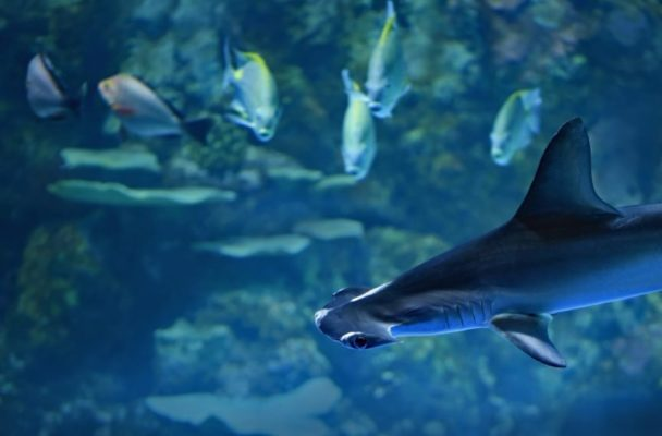 活性が低いサメ