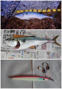 ショアジギング釣ったブリのデジタル魚拓の作成方法
